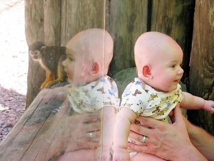 zoo 3 flat head